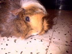 Winnie, rongeur