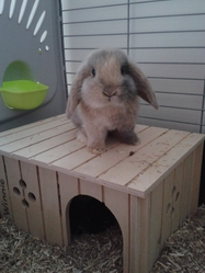 Winnie, rongeur Lapin