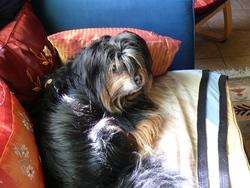 Winny, chien
