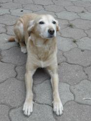 Winny Peg, chien