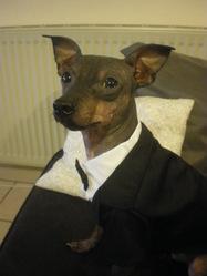 Winston, chien
