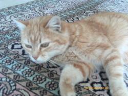Wiskynne, chat