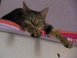 Wiwi, chat Gouttière