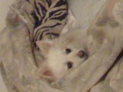 Wizz, chien