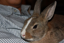 Wizzy, rongeur Lapin