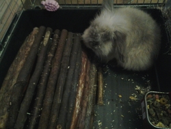 Wolfy, rongeur Lapin
