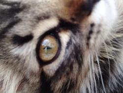 Wolvy, chat Gouttière