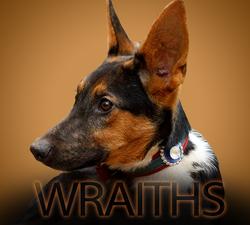 Wraiths, chien Basenji