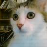 Wubzy, chat