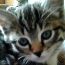 Wyatt, chat Gouttière