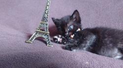 Xena, chat Gouttière