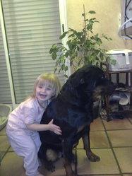 Xéna, chien Rottweiler