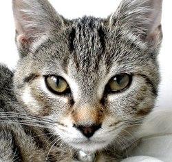 Xéna, chat Gouttière
