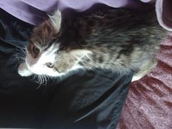 Xéna, chat