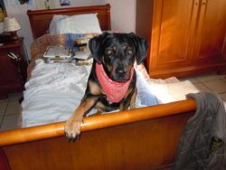 Xena , chien