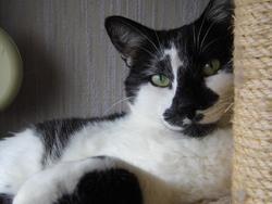 Xénon, chat Gouttière