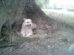 Xumi, chien
