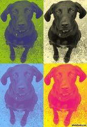 Yann, chien