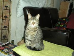 Yaourt, chat