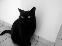Yaris, chat Gouttière