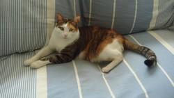 Yasmine, chat