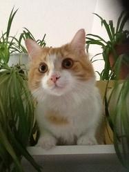 Yéti, chat