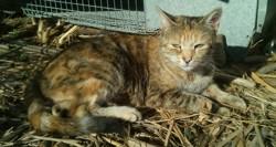 Ygrid, chat Gouttière