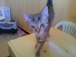 Yo, chat Gouttière