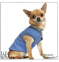 Yoda, chien Chihuahua