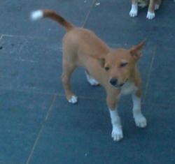 Yona, chien