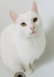 Yooki, chat Gouttière