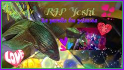 Yoshi Au Paradis, autres