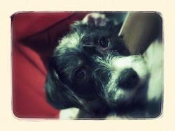 Youki, chien