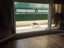 Youki, chat Gouttière