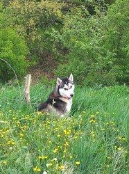 Yshka, chien