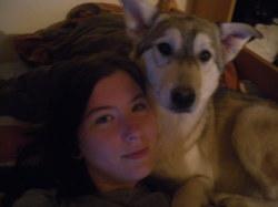 Yui, chien Chien-loup de Saarloos