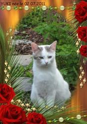 Yuki, chat Gouttière