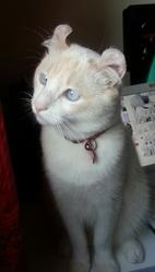 Yuki, chat