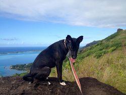 Yukie, chien