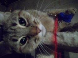 Yumi, chat Gouttière