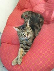 Yuna, chat Européen
