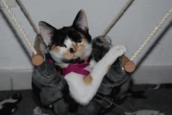 Yuna, chat Gouttière