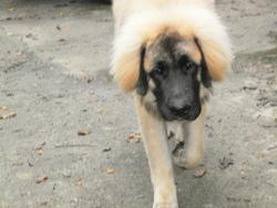 Yunix, chien