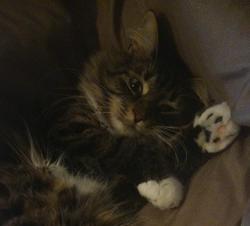 Yuri, chat Gouttière