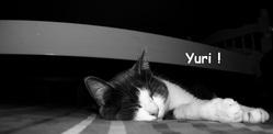 Yuri, chat