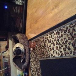 Zac, chien Carlin