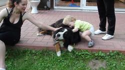 Zara, chien Bouvier bernois