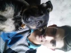 Zara, chien Berger allemand