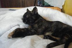 Zara, chat Gouttière