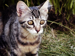 Zazie, chat Gouttière